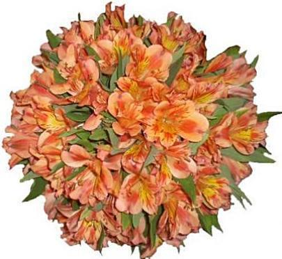 Orange Alstroemeria Bouqet