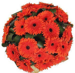 Orange Gerbera with Greenery