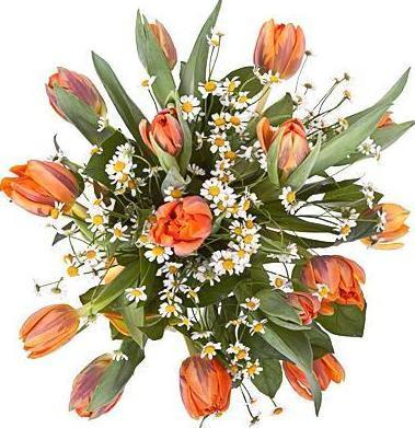 Orange Tulips with Aster Flowers