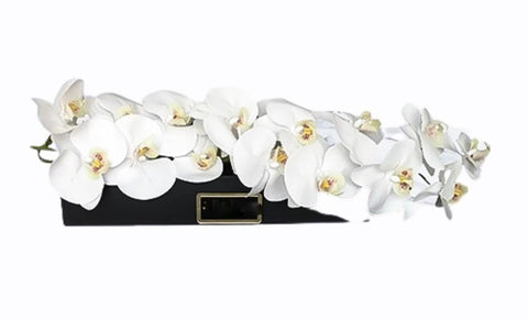 Phalaenopsis in Luxury Box