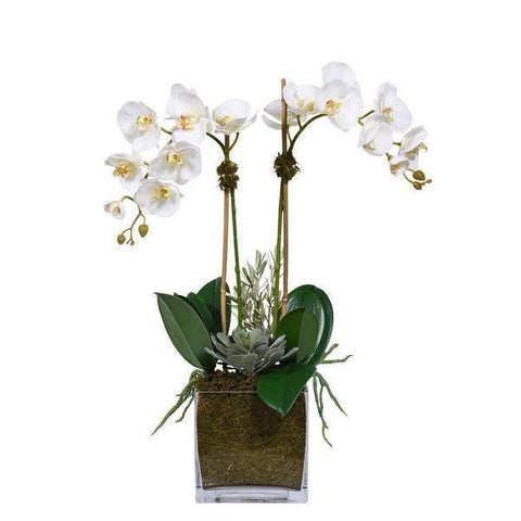 Phalenopsis Orchids and Succulent in Glass Square Pot