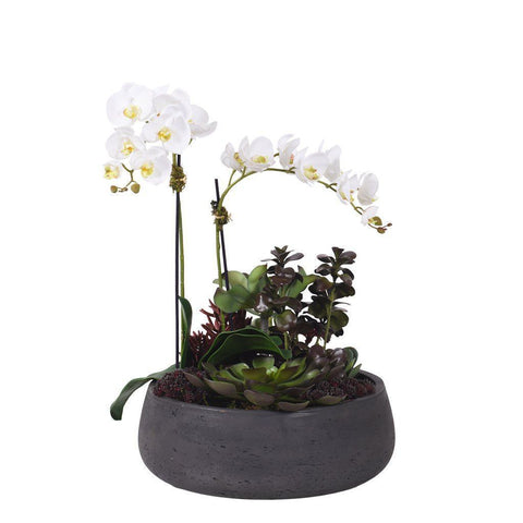 Phaleonopsis Orchids and Succulent in Oval Pot