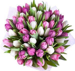 Pink & White Tulips