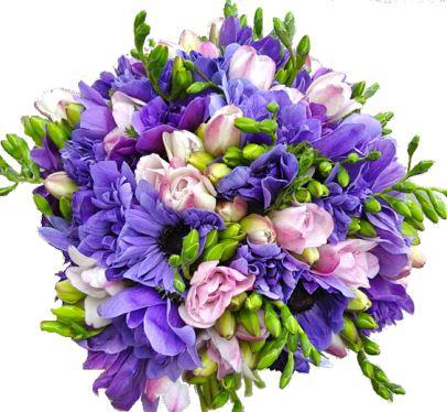 Purple & Pink Freesias