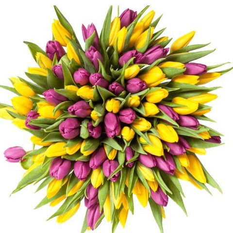 Purple & Yellow Tulips