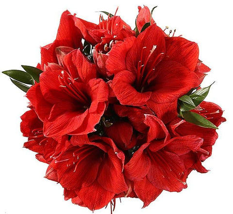 Red Amaryllis Bouquet