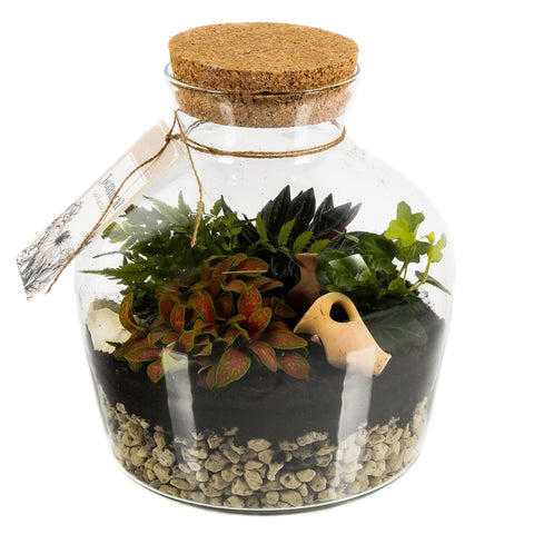 Terrarium with Coleus