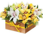 Yellow and White Cymbidium Signature Box