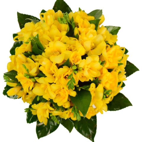 Yellow Freesias Bouquet
