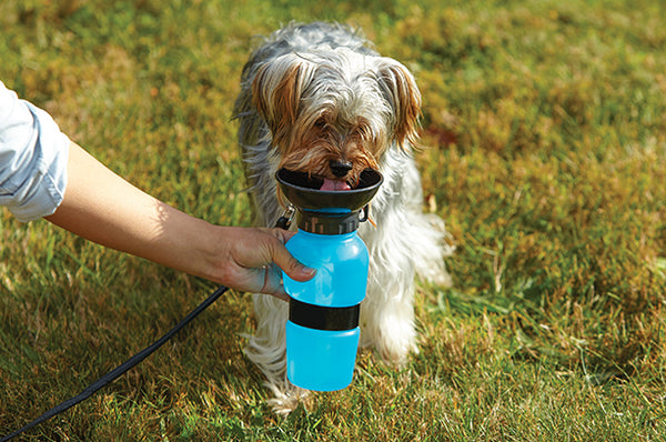 dog bottle for travel