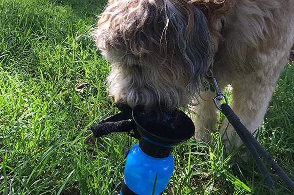 pet water bottle for hikes