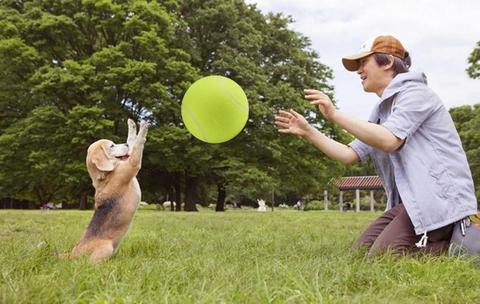 ball toys for dogs