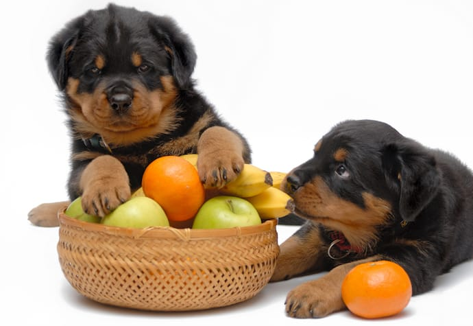 Can Dogs Eat Oranges? Benefits of The Tasty Citrus