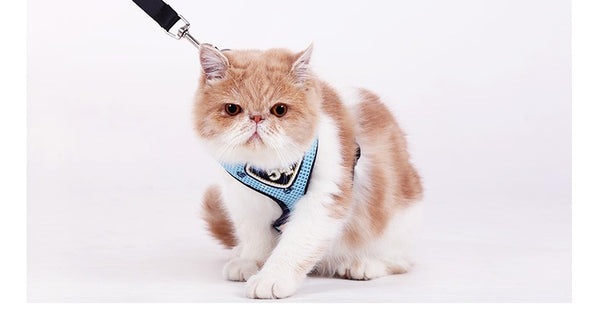 Cat Harness With Leash - YourStarPet