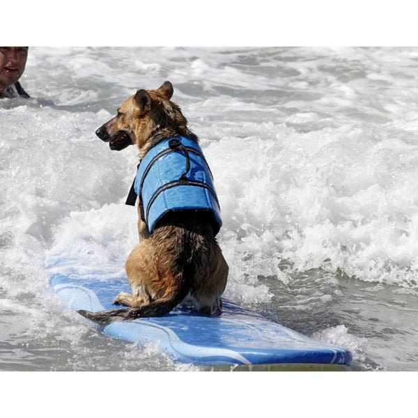 Life Vest for Dogs - Your Star Pet