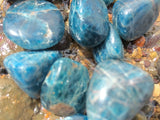 Blue Apatite Tumbled - Little Gems Metaphysical Store
