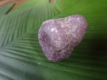 Load image into Gallery viewer, Lepidolite Tumbled - Large - Little Gems Metaphysical Store