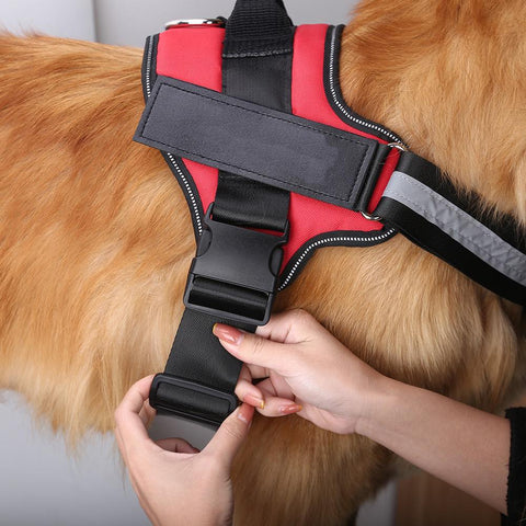 Image of Personalized Reflective Pet Harness