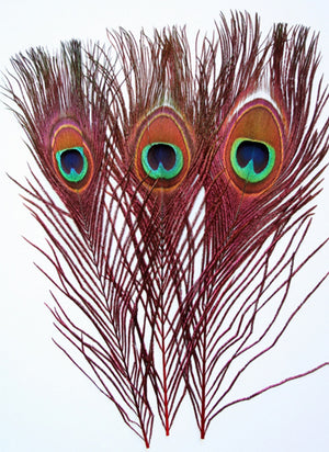 Peacock Eyed Sticks