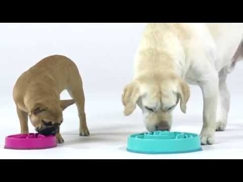 Outward Hound Fun Feeder Slo-Bowl Dog Bowl - Select color and size-Le Pup Pet Supplies and Grooming
