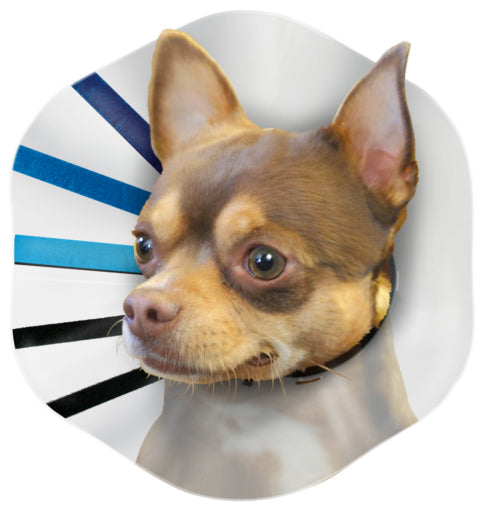 Kong EZ Clear Collar Cone Dog Supply-Le Pup Pet Supplies and Grooming