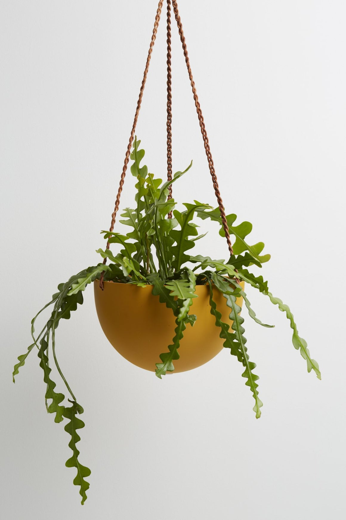 Hanging Dome planter  - Golden
