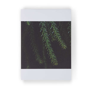 Plantas I by Theresia Koch: 3 Notecards