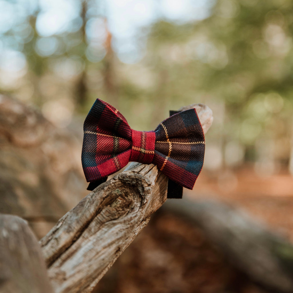 Amber - Bow tie
