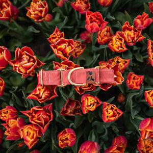 Penny - Martingale collar