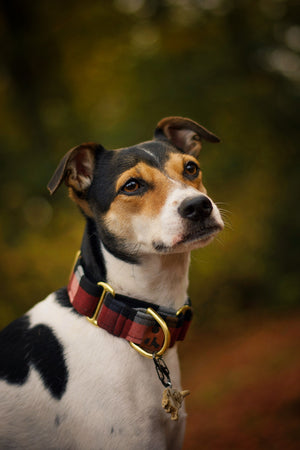 Clay - Martingale collar