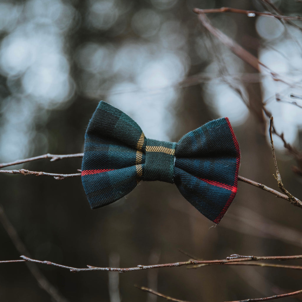 Evergreen - Bow tie