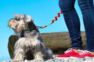 Best dog leashes | Rio Dogs Store