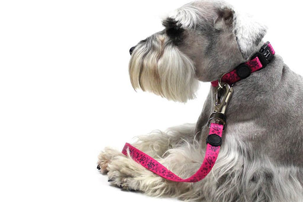 Dog Leash | Pink Print | Rio Dogs Store
