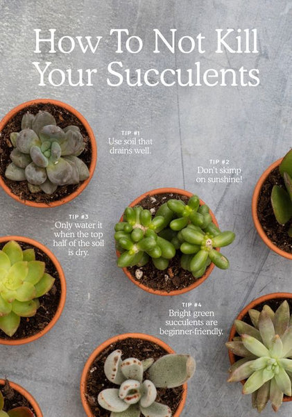 How Not To Kill Your Succulents