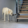 ELEVATED 30CM DOG STAND + BOWL - BENJI + MOON