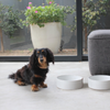 BRANDED CERAMIC PET BOWL - BENJI + MOON