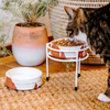 ELEVATED 15CM PET STAND + BOWL