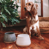 LONG-EARED CERAMIC DOG BOWL - BENJI + MOON
