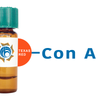 Concanavalin A Lectin (Con A) - Texas Red