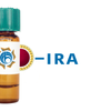 Iris hybrid (Dutch iris) Lectin (IRA) - Colloidal Gold