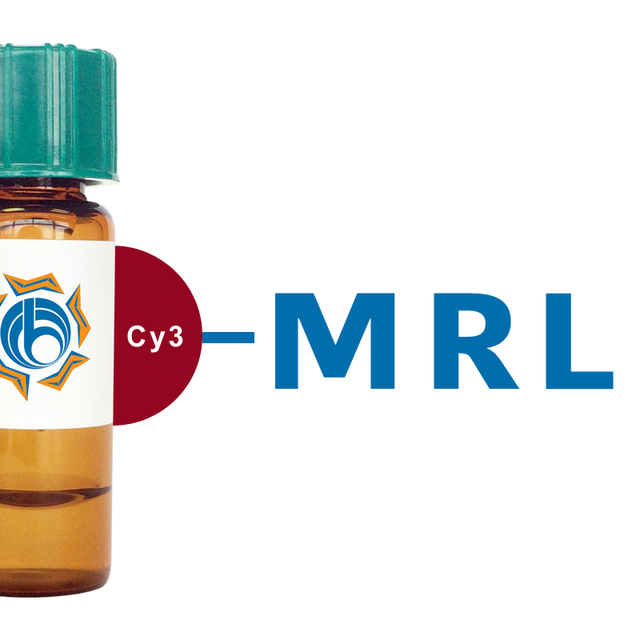 Morus rubra (Red Mulberry) Lectin (MRL) - Cy3