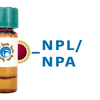 Narcissus pseudonarcissus Lectin (NPL/NPA) - Colloidal Gold