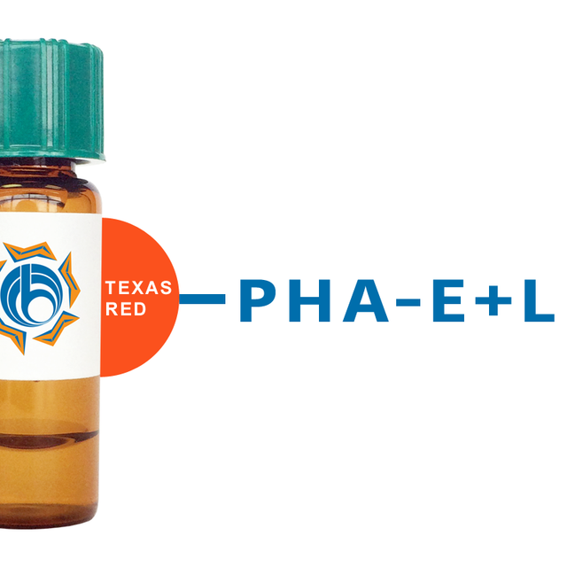 Phaseolus vulgaris Lectin (PHA-E+L) - Texas Red