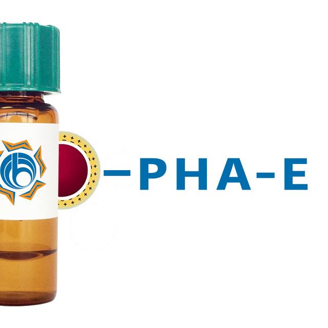 Phaseolus vulgaris Lectin (PHA-E) - Colloidal Gold