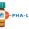 Phaseolus vulgaris Lectin (PHA-L) - Texas Red