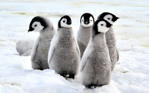 Global Penguin Society: March on with Our Flightless Friends