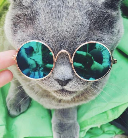 Fashion Pet Sunglasses Cat Sun