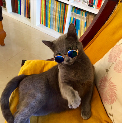 fashion-pet-sunglasses