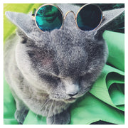 Fashion Pet Sunglasses