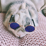 sunglasses pet rabbit cool sun sunnies